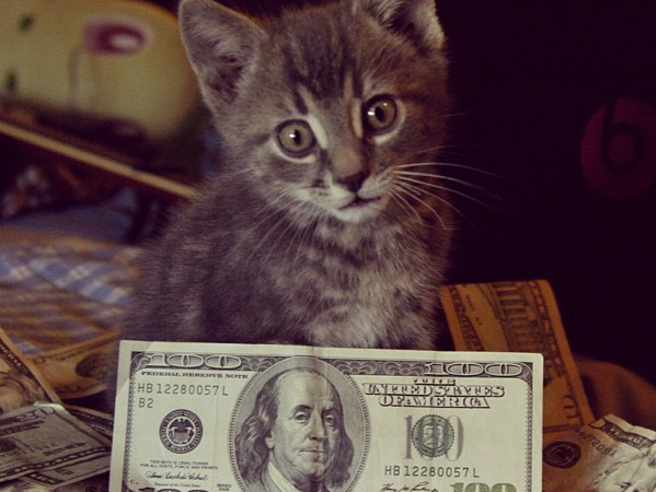 17 Adorable Cats That Will Always Be Richer ThanYou