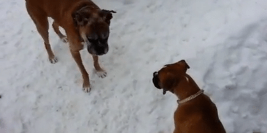 This Old Dog Plays A Trick On This Puppy And It's The Cutest ThingEver