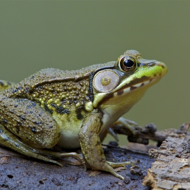 I'd Rather Kiss A Few Frogs Than Wait For Prince Charming