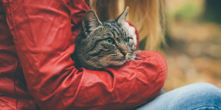 10 Reasons Why Having A Cat Is Better Than Having A Boyfriend