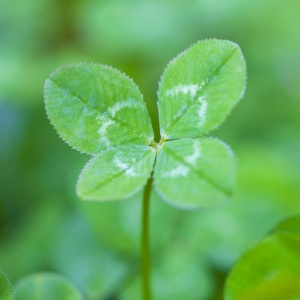 The Flaw In Using Luck As An Excuse For Our Mistakes