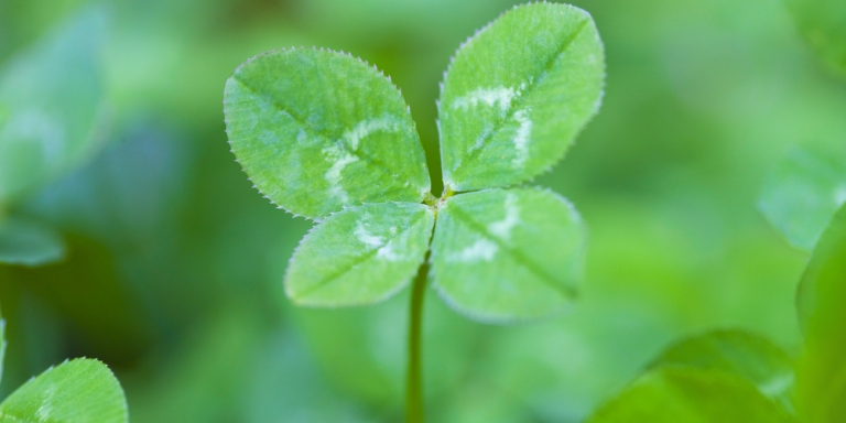 The Flaw In Using Luck As An Excuse For OurMistakes