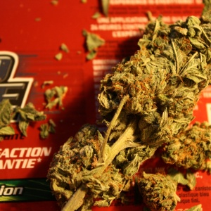 40 Classic Quotes About Marijuana