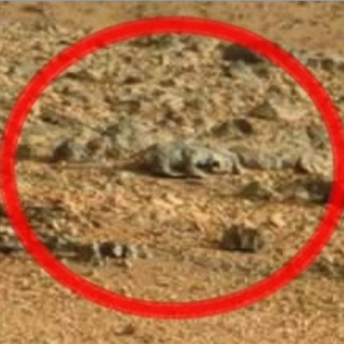 """The One Psychological Trick That's Fooled Everyone On Tumblr Into Seeing """"Faces"""" And """"Lizards"""" In NASA Mars Photos"""