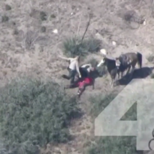 Police Beating Of California Horse Thief 'The Worst Since Rodney King'