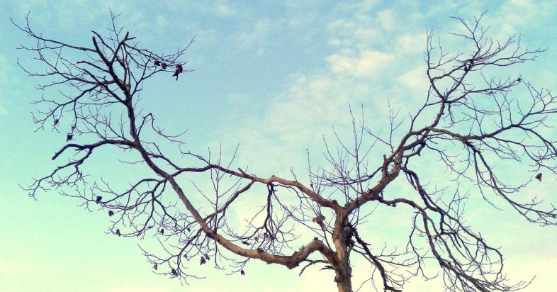 Flickr / Keoni Cabral