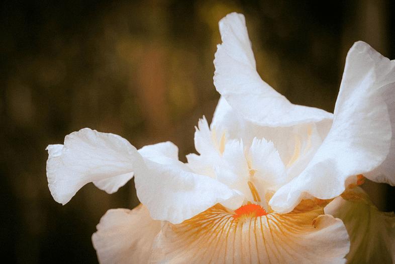 Flickr, Sonny Abesamis