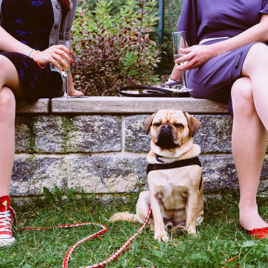 Does Your Dog Need A Condom? 17 Facts About Animals And STDs
