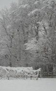 fredonia in winter