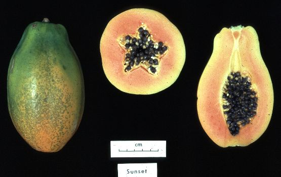 A genetically modified papaya. // Public domain