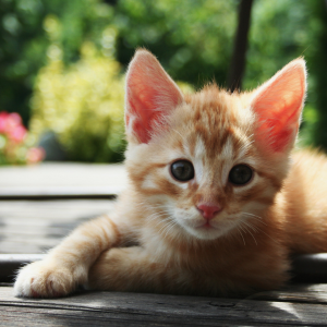 The 100 All-Time Greatest Quotes About Cats