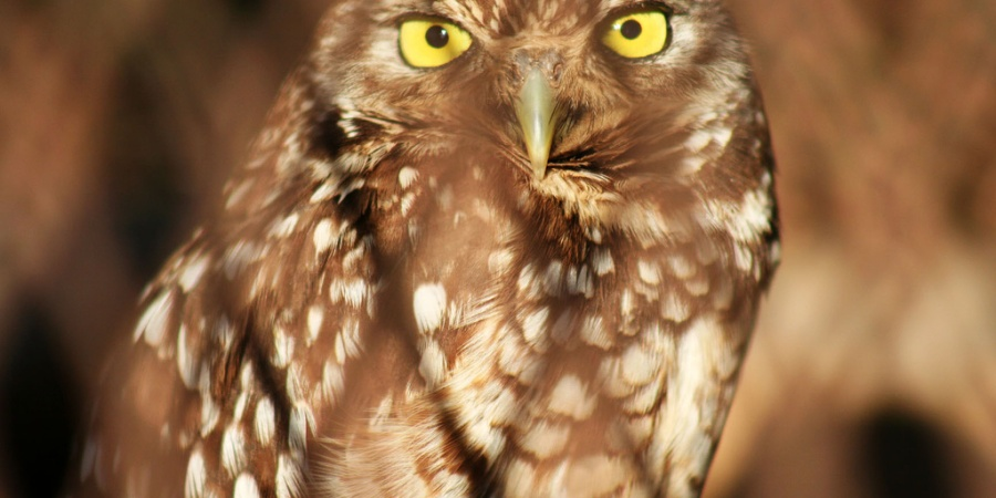 When I Was A Little Kid My Family Illegally Adopted An Owl, And This Is WhatHappened