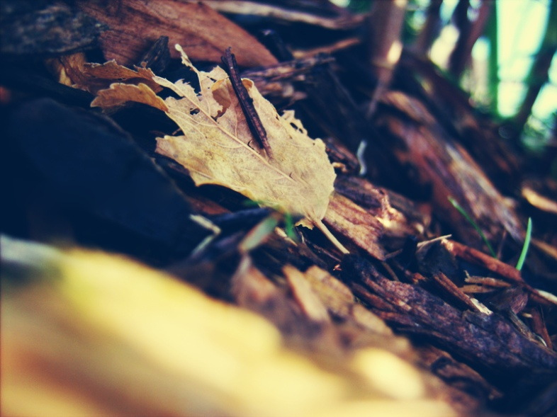 Flickr / Hannah Nicole