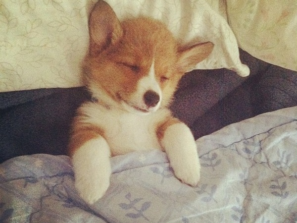 19 Adorable Photos Of Puppies All Tucked In For Their LittleNap