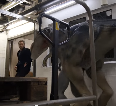 Watch Chris Pratt Get The Sh*t Scared Out Of Him By Fake Dinosaurs