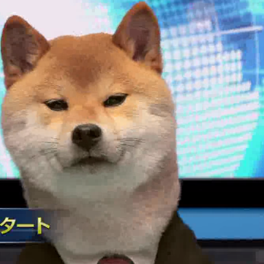 The World Would Be A Better Place If Shiba Inus Presented The News Every Night