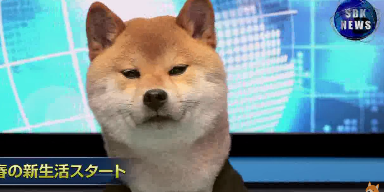 The World Would Be A Better Place If Shiba Inus Presented The News EveryNight