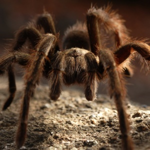 Over 25,000 F*cking Spiders Have Invaded This Australian Town
