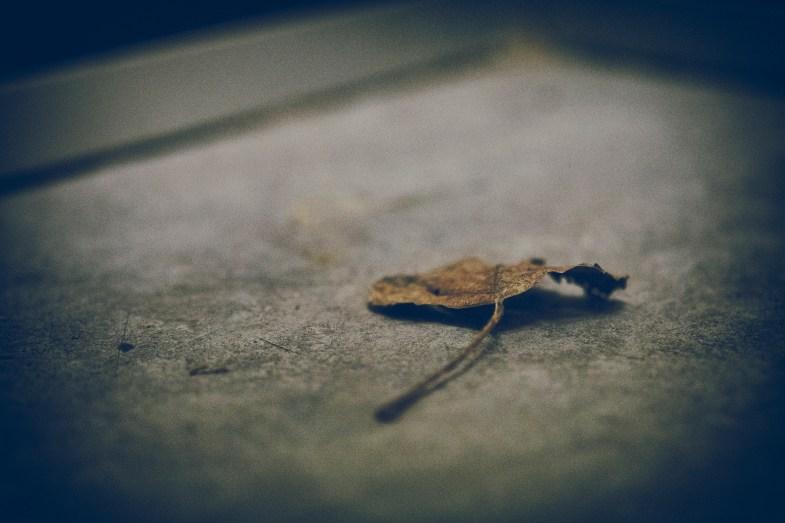Flickr / marco monetti
