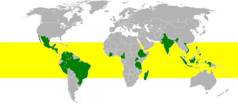 """The Global """"Coffee Belt"""" (Wikimedia Commons)"""