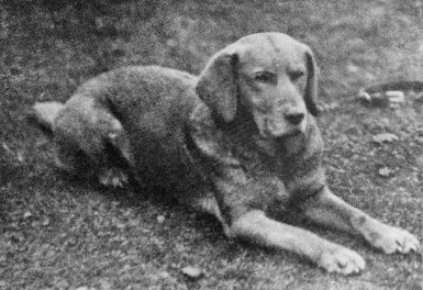 Ben, most likely a 'very good boy' via wiki commons