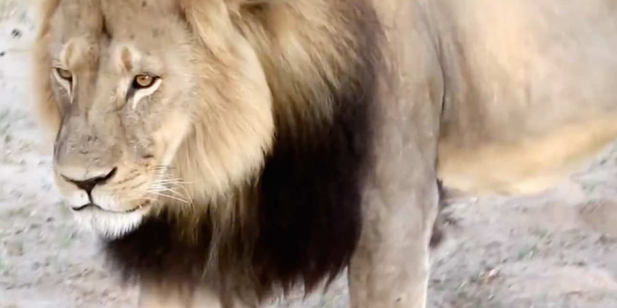 In Honor Of Cecil The Lion: 70 Powerful Quotes About Animal Rights