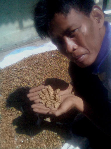 Indonesian farmer holds coffee beans excreted from civet cats. (Wikimedia Commons)