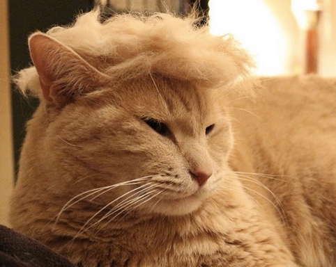 Look At These 14 Hilarious Cats Mocking Donald Trump's EccentricHair