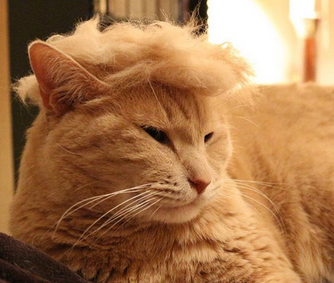 Look At These 14 Hilarious Cats Mocking Donald Trump's Eccentric Hair
