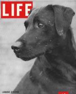 Screenshot via Life Magazine