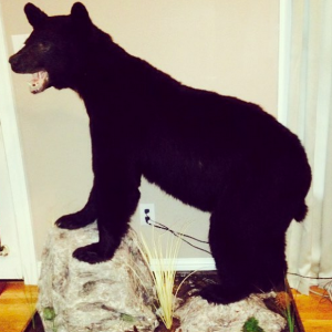 19 'Holy Hell This Is Cool' Photos Of Taxidermied Creatures