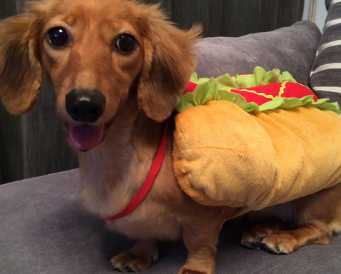 Check Out These Adorable Wiener Dogs Celebrating National Hot DogDay