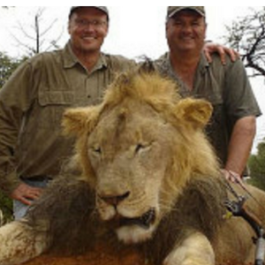Here Are The Best Reviews So Far From The Yelp Page Of The Doctor That Killed Cecil The Lion