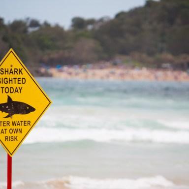 Blood In The Surf: 13 Insanely Brutal Shark Attacks