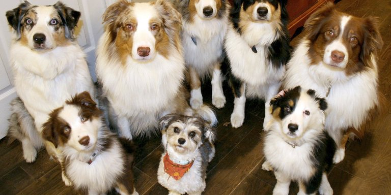 30 Facts About Dogs I'll Bet You Didn'tKnow