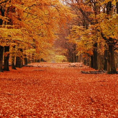 5 Perfect Reasons We Absolutely Can't Wait Till Fall