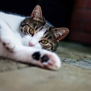 32 Facts About Cats I'll Bet You Didn't Know
