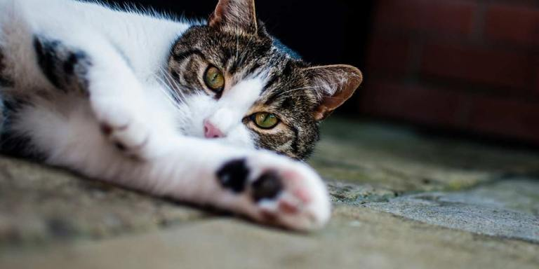 32 Facts About Cats I'll Bet You Didn'tKnow