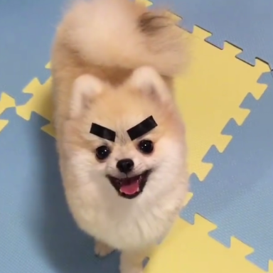 Some Guy Put Dried Seaweed On His Pet Pomeranian And It's The Cutest Thing You'll Ever See