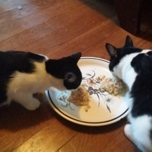 Virginia Neighborhood Unites To Care For Abandoned Kittens