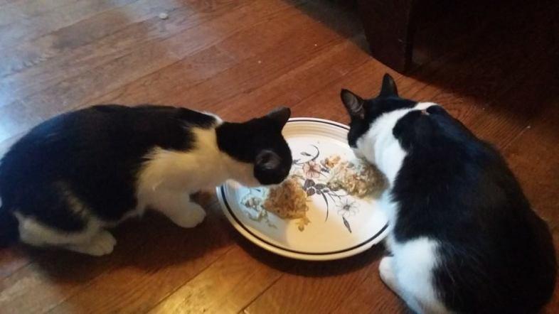 Facebook / Jen's Foster Cats