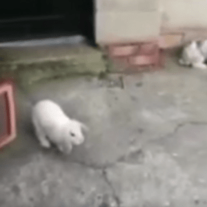 Did This Girl Film A Ghost Playing With Her Pet Rabbits?