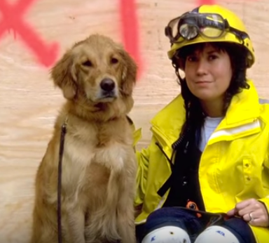 You Have To Watch This Incredibly Heartwarming Story Of The Last Surviving 9/11 Rescue Dog