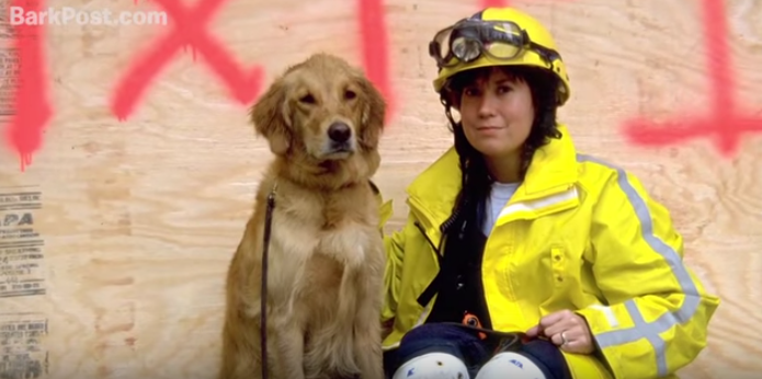 You Have To Watch This Incredibly Heartwarming Story Of The Last Surviving 9/11 RescueDog