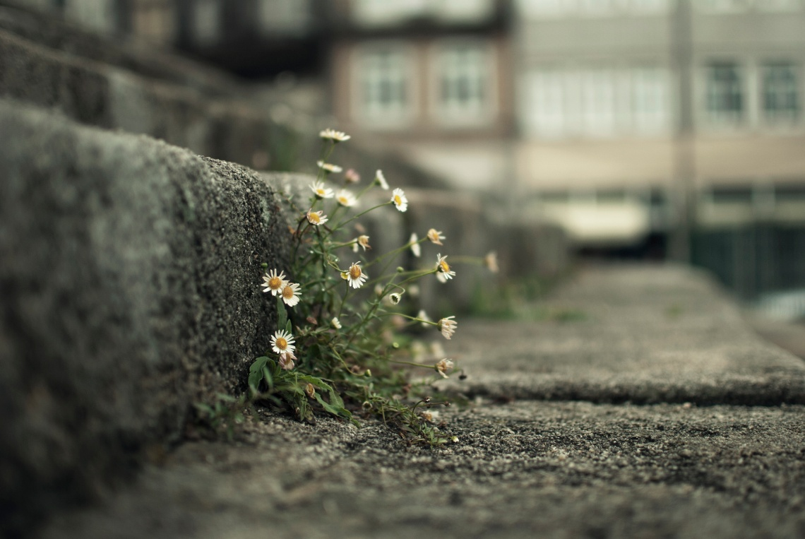 Flickr / José Manuel Ríos Valiente