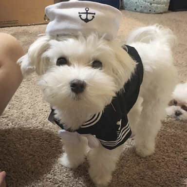 27 Ridiculously Cute Dogs That Totally Nailed Their Halloween Costumes