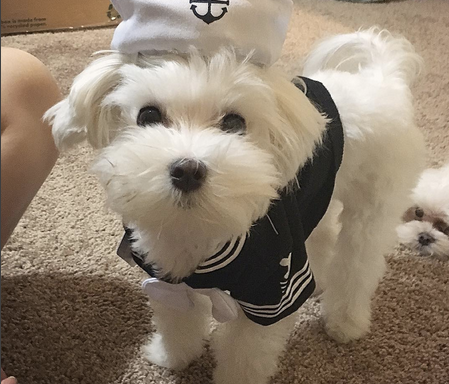 27 Ridiculously Cute Dogs That Totally Nailed Their HalloweenCostumes