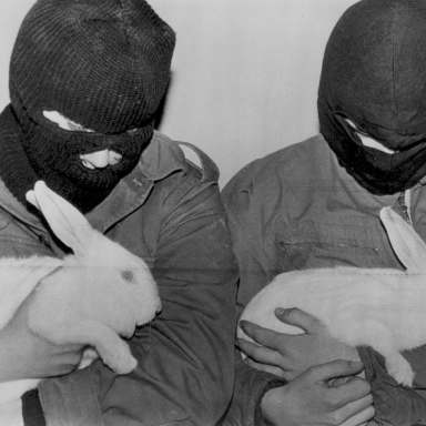 I Understand The Despair Driving The Animal Liberation Front