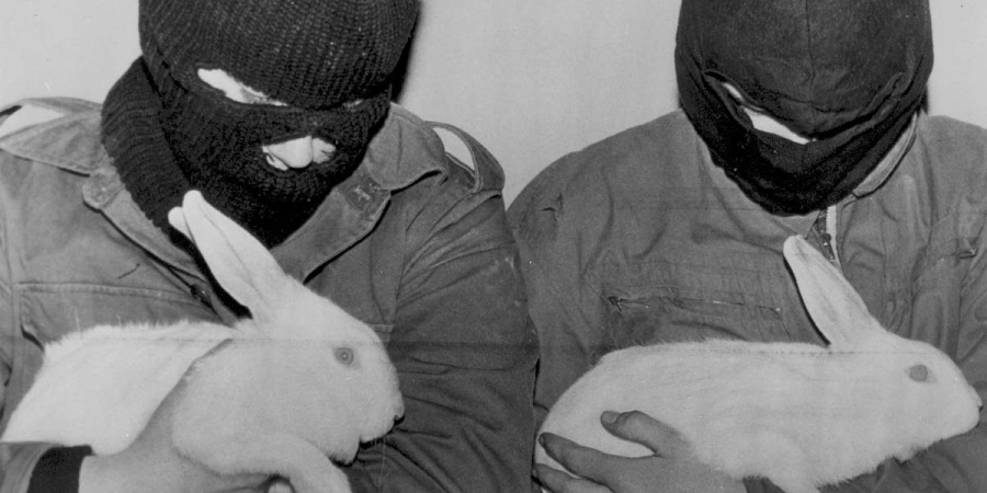 I Understand The Despair Driving The Animal LiberationFront