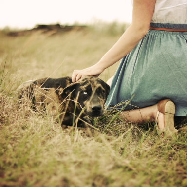 8 More Reasons To Love Dating A Dog Owner